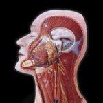 CEP 1 - Radiologia Online