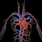 angio 1 - Radiologia Online