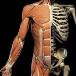 msk new - Radiologia Online