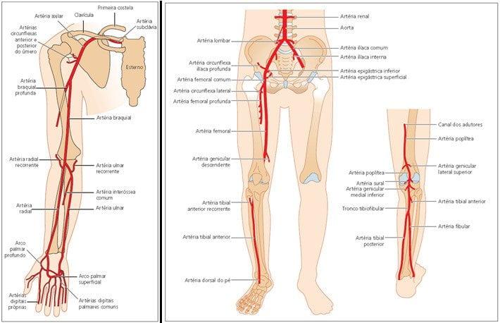 Anatomia arterial mmss e mmii - Manual de Doppler